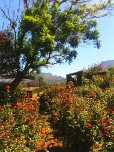 Stop and smell the roses at Charm Farm michalah francis2